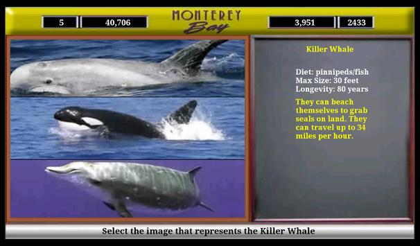 Monterey Bay Sea Life screenshot 12