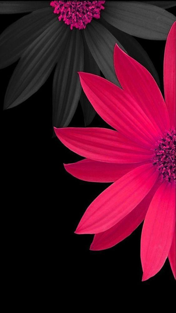 Flowers And Roses Images Wallpaper Gif 4k For Android Apk Download