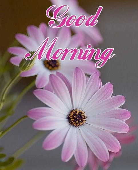 Good Morning Flowers Images Gif For Android Apk Download