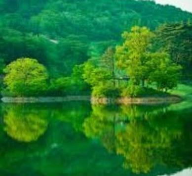 Green 80 Nature Wallpaper screenshot 1