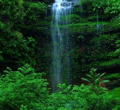 Green 80 Nature Wallpaper screenshot 2