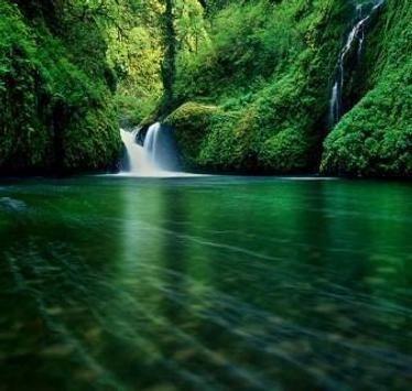 Green 80 Nature Wallpaper screenshot 3