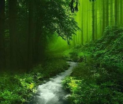 Green 80 Nature Wallpaper screenshot 4