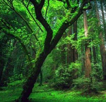 Green 80 Nature Wallpaper screenshot 6