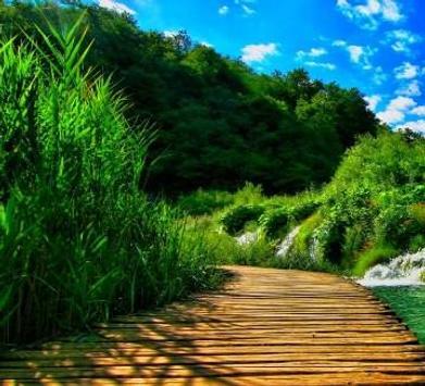 Green 80 Nature Wallpaper screenshot 7
