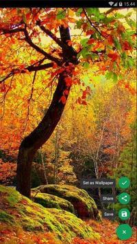 Autumn Forest Wallpaper screenshot 1