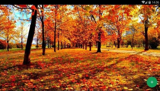 Autumn Forest Wallpaper screenshot 4