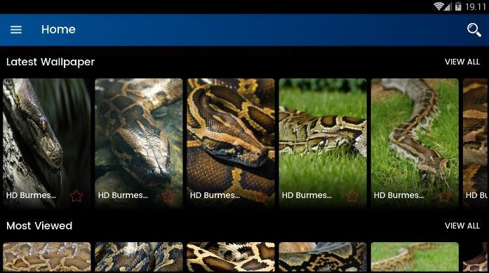 Burmese Python HD Wallpaper for Android - APK Download