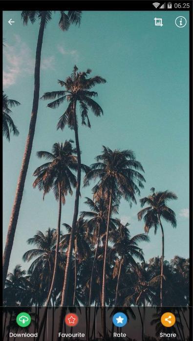 Pohon Kelapa Hd Wallpaper For Android Apk Download