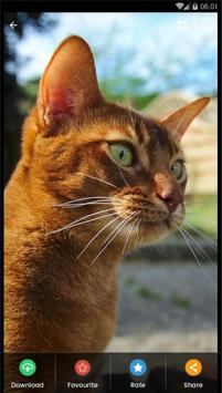 Abyssinian Cat HD Wallpaper screenshot 3