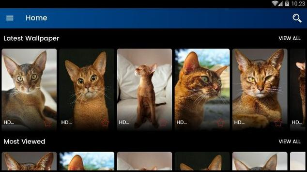 Abyssinian Cat HD Wallpaper screenshot 8