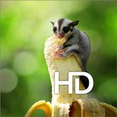 Sugar Glider HD Wallpaper icon