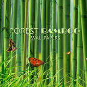 Bamboo Forest Wallpaper icon