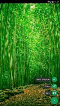 Bamboo Forest Wallpaper screenshot 1