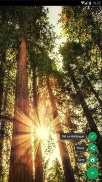 Sunbeam Forest Wallpaper screenshot 1