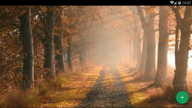 Forest Way Wallpaper screenshot 4