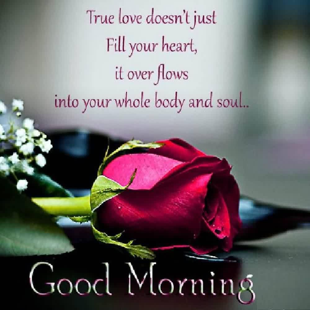 Guten Morgen Gif Blume Hd Bilder Für Android Apk Herunterladen