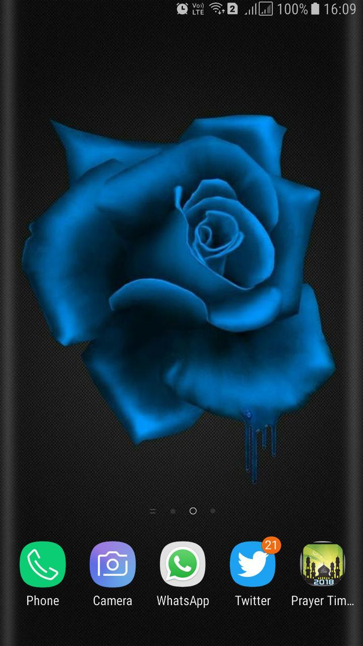 HD Blue Rose Wallpaper for Android - APK Download
