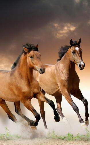 Horses Live Wallpaper Apk 22 0 Download For Android Download