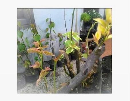 How to cuttings plants screenshot 21