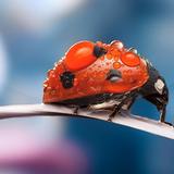 Ladybug Live Wallpaper 🐞 Cute Moving Backgrounds