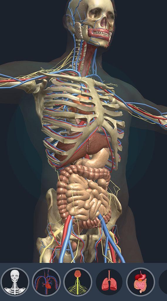 anatomy rigged torso ma