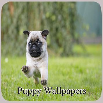 Puppy Wallpapers screenshot 8