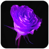 Purple Flower Wallpaper icon