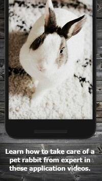 How to Take Care of a Pet Rabbit (Guide) screenshot 1