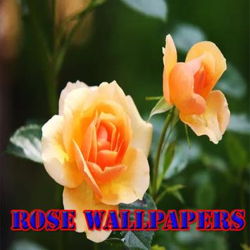 Rose wallpapers screenshot 1