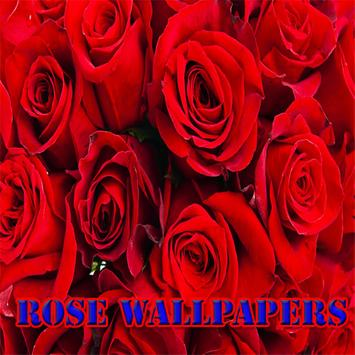 Rose wallpapers screenshot 2