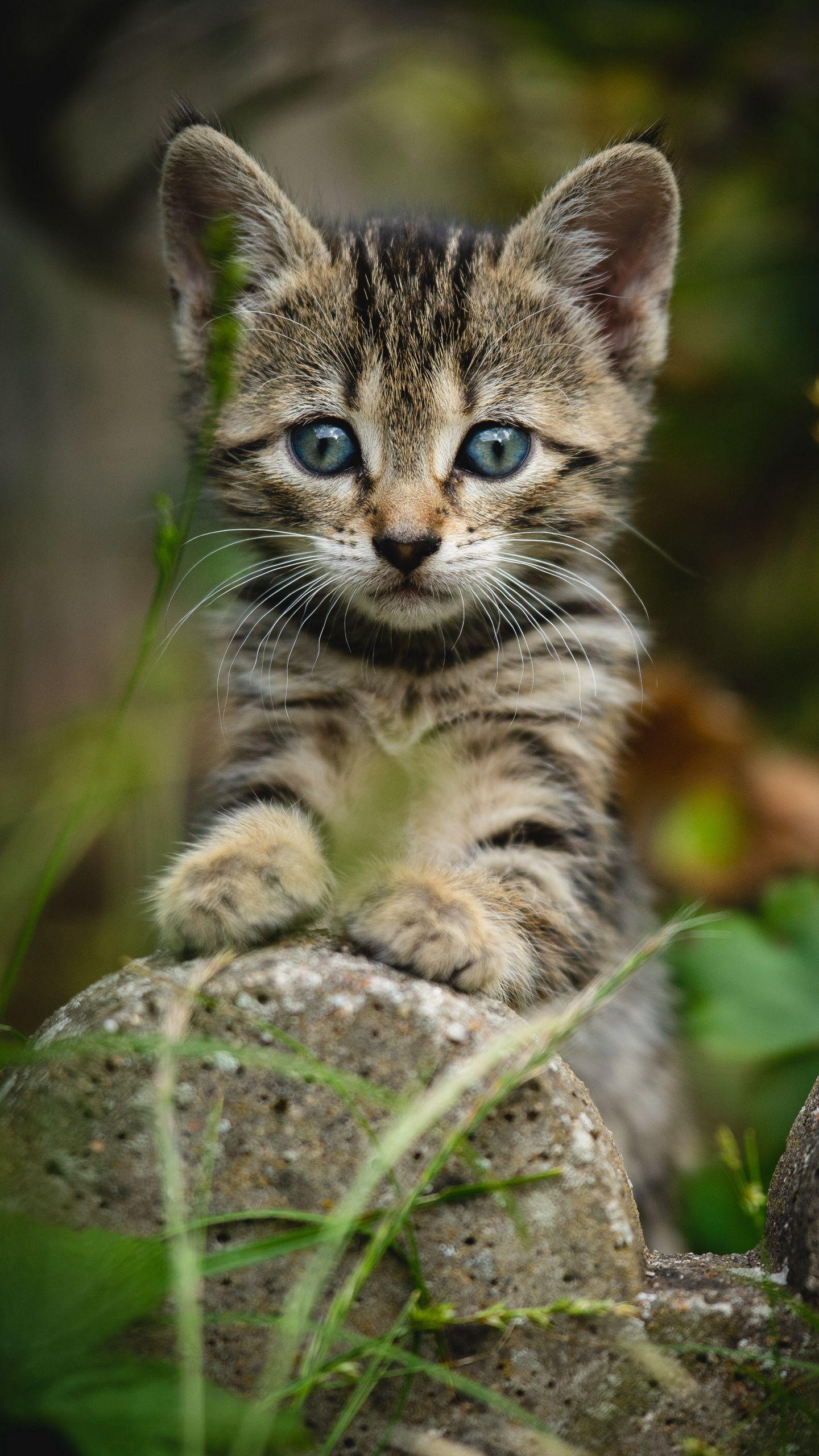 4k Cute Kitten Cats Wallpapers Hd For Android Apk Download