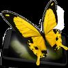 Butterflies 3D biểu tượng