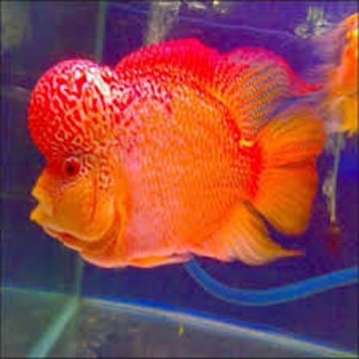 Download 75 Wallpaper Iphone Ikan Gratis Terbaik