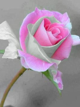 Flowers And Roses Images GIF screenshot 1