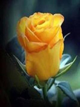 Flowers And Roses Images GIF screenshot 5