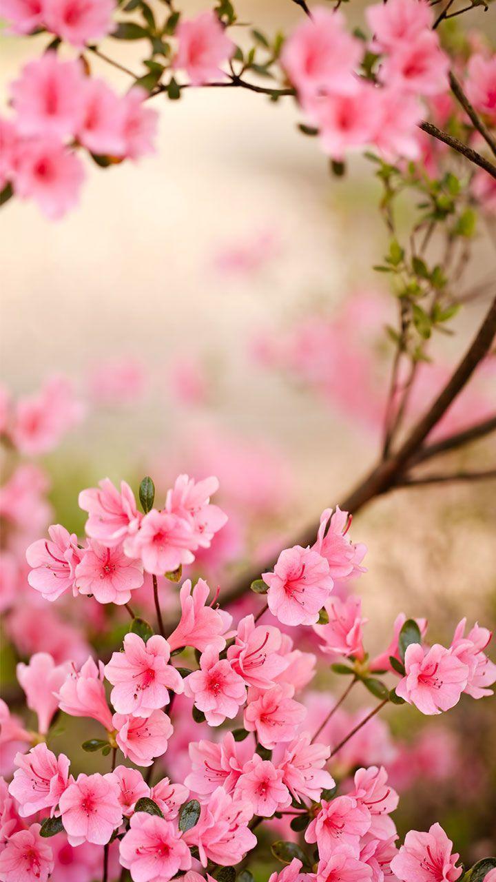 Android 用の 春の花ライブ壁紙 Apk をダウンロード