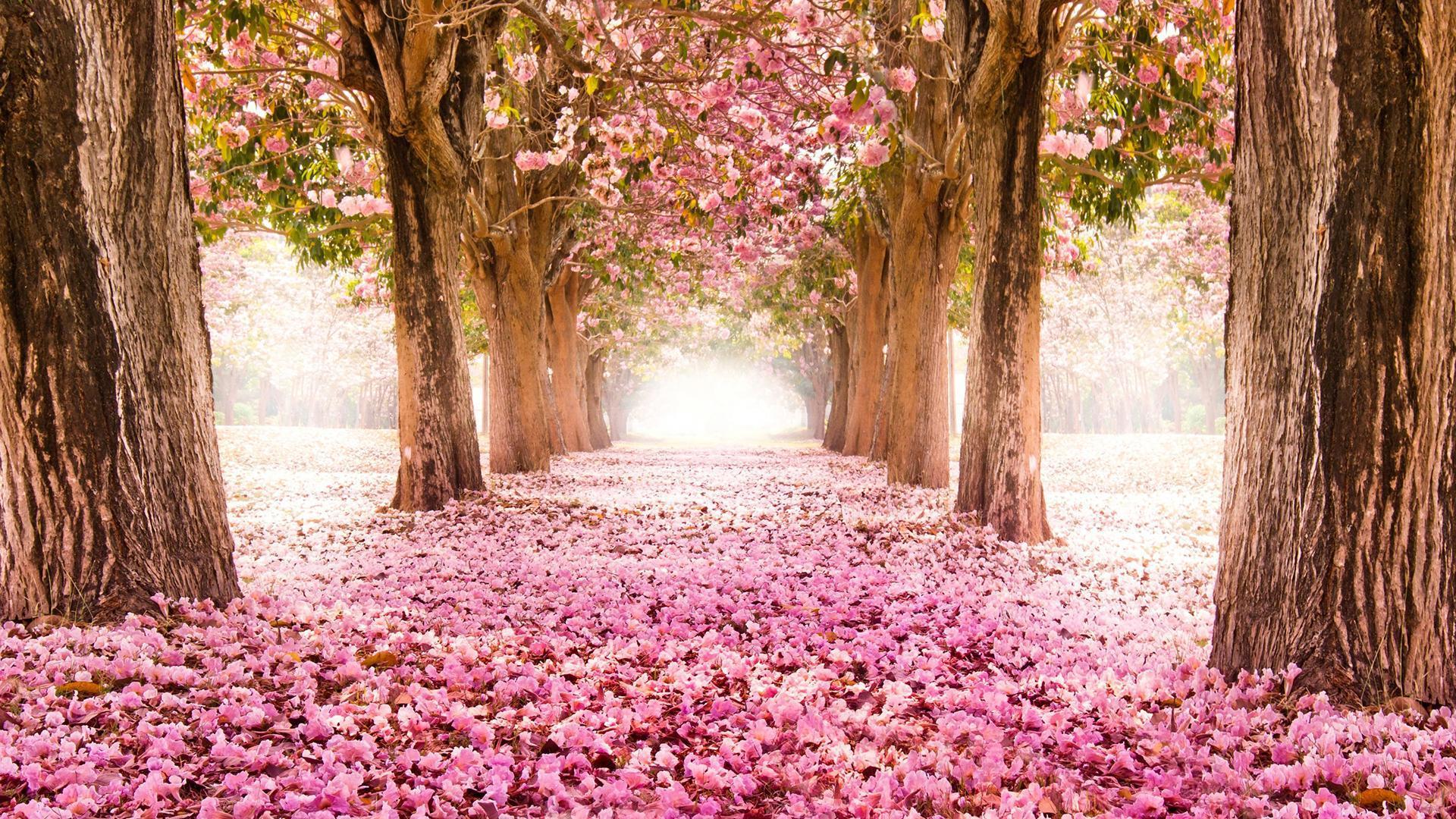 был вознесен самые красивые фото весны в мире документов был представлен