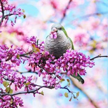 Spring Live Wallpaper screenshot 4