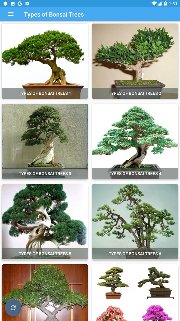 Types Of Bonsai Trees For Android Apk Download