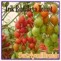 Tricks Tomato Cultivation