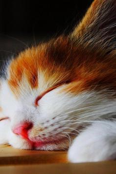 Wallpaper Cat HD Poster