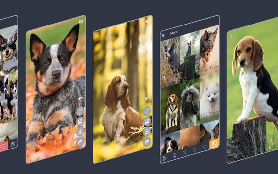 Dogs Wallpapers screenshot 3