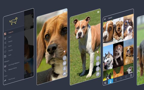 Dogs Wallpapers poster