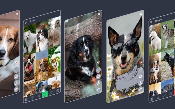 Dogs Wallpapers screenshot 2