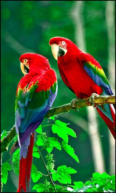 Beautiful Birds Wallpapers Free New For Android Apk Download
