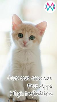 Cat Sounds poster