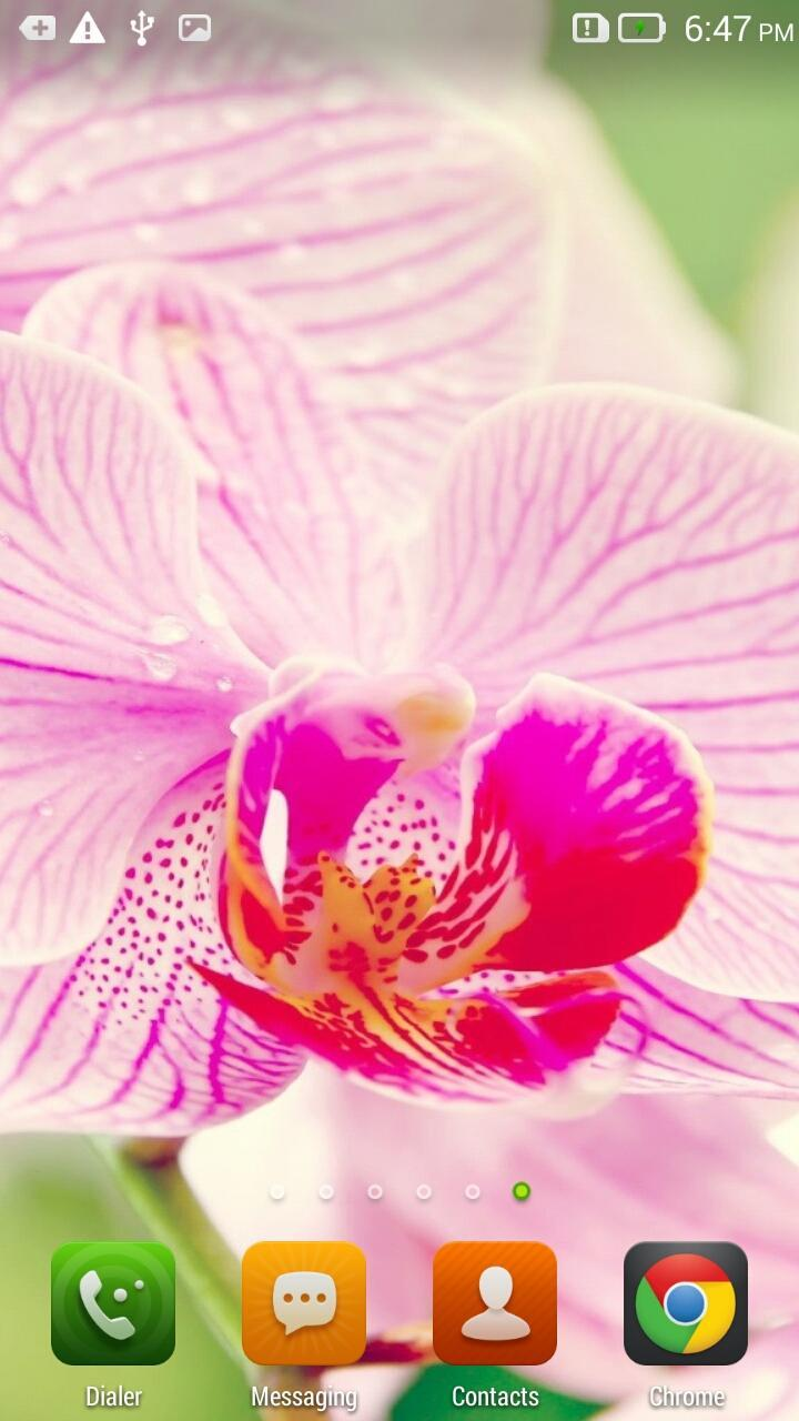 Pink Orchid Live Wallpaper For Android Apk Download