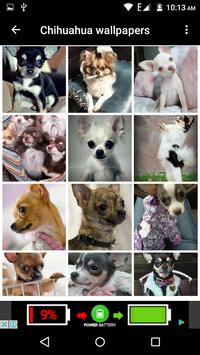 Chihuahua Dog Wallpapers Hd screenshot 8