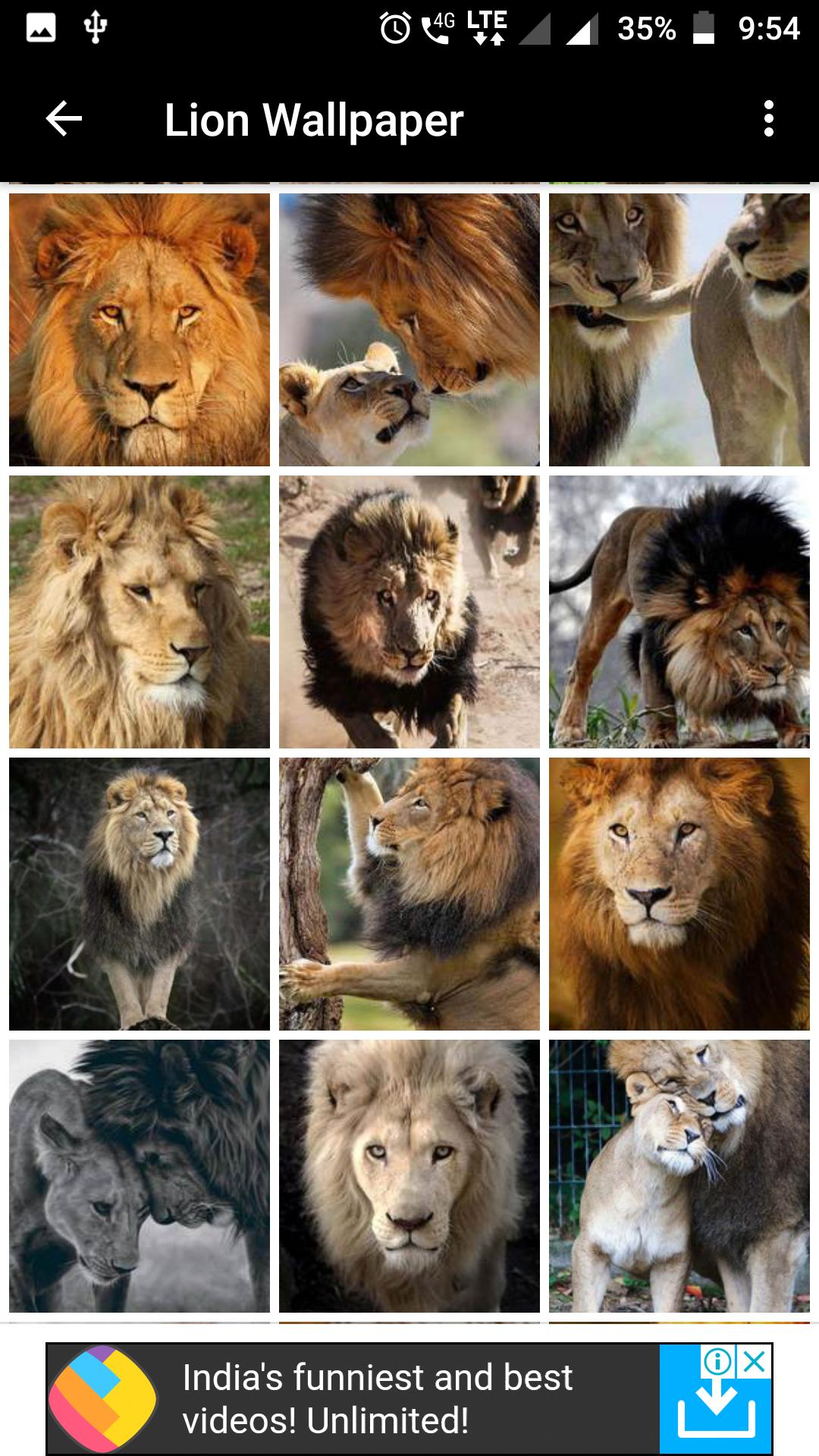 Lion Wallpapers Hd For Android Apk Download Images, Photos, Reviews